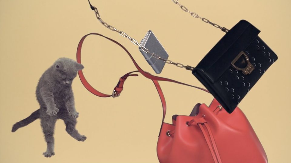 Preview image for a video called Cats directed by Andrea Barone for Coccinelle